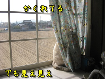 b0151748_11542494.jpg