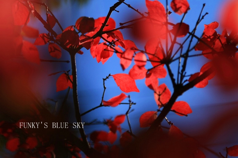 秋を追いかけて♪_c0145250_1626406.jpg