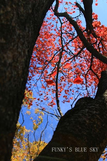 秋を追いかけて♪_c0145250_16271550.jpg
