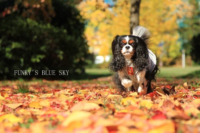 秋を追いかけて♪_c0145250_16272359.jpg