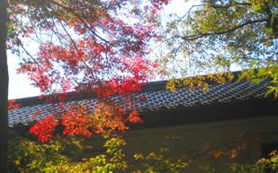平林寺の紅葉_b0115553_1123472.jpg