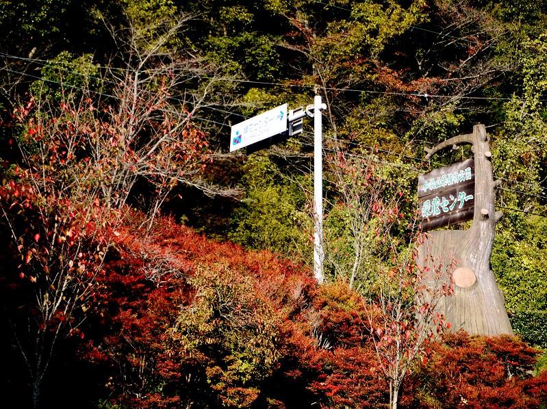 和歌山県植物公園緑花センター _b0093754_21415198.jpg