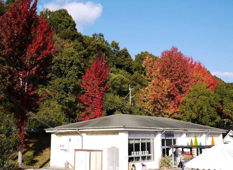 和歌山県植物公園緑花センター _b0093754_21422962.jpg