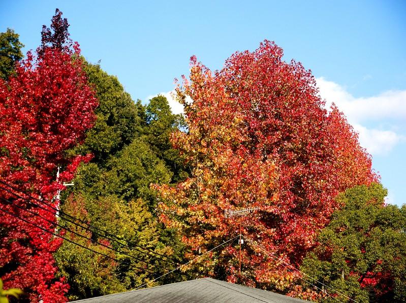 和歌山県植物公園緑花センター _b0093754_2142484.jpg