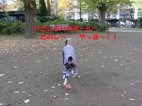 f0223972_2053374.jpg
