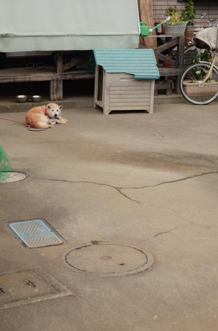 秋・犬景_b0194880_1624974.jpg