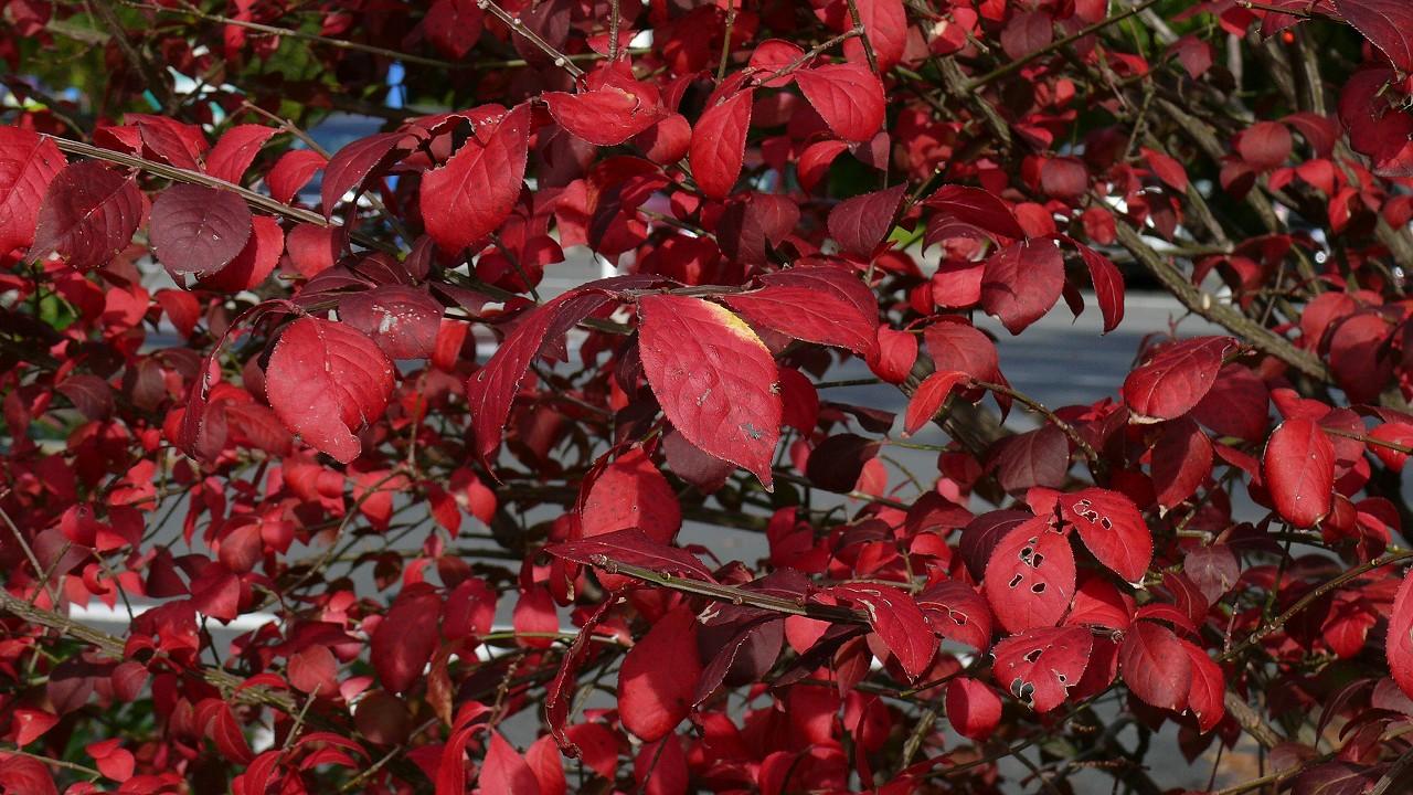 【 日記 11/15(木) 】 晩秋から初冬へ_a0185081_17292234.jpg