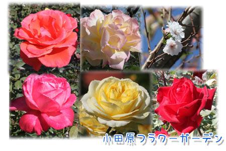 b0024183_20111293.jpg