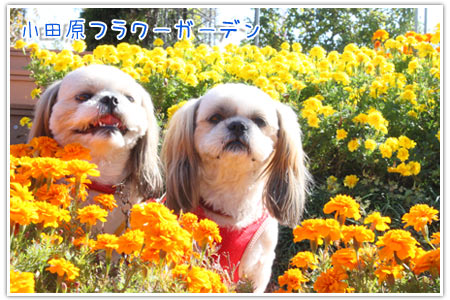 b0024183_20131887.jpg