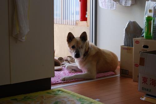 裏磐梯 : 仮設住宅へ_c0124100_0175267.jpg