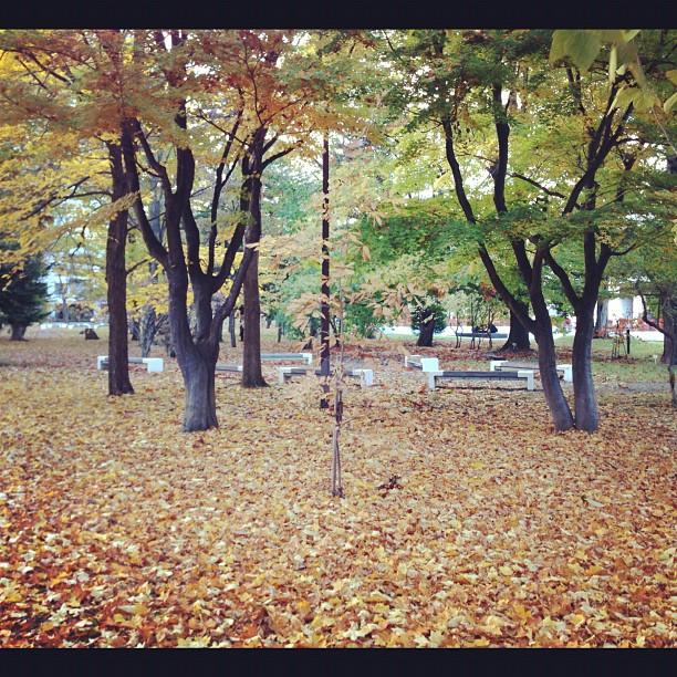 ある日の散歩_f0032814_22394875.jpg