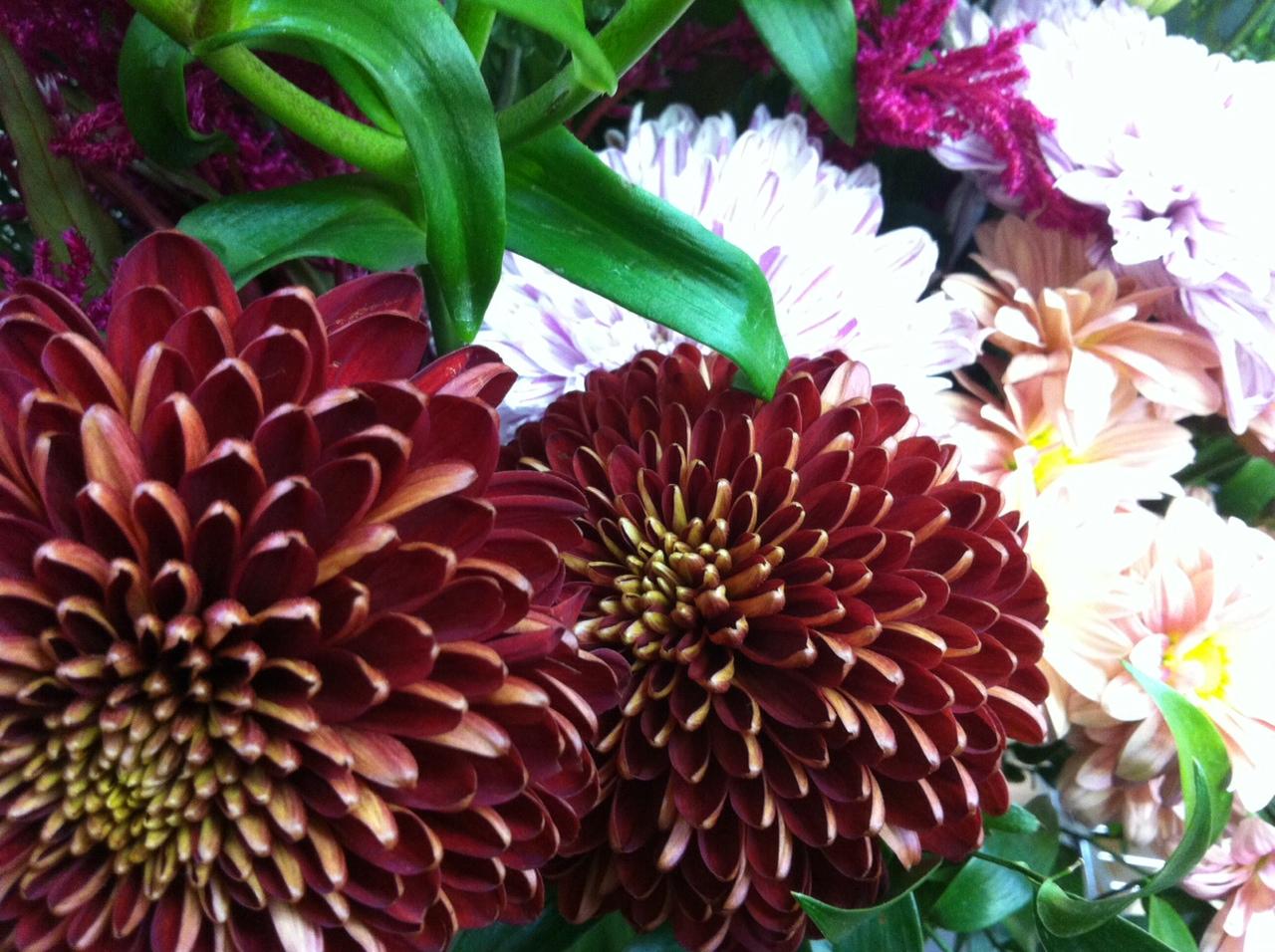 今週のお花とセール情報_a0200423_353484.jpg