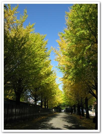 神宮工作所 黄葉情報_f0129726_2282161.jpg
