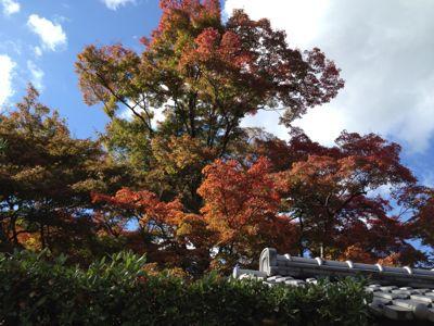 紅葉も見頃に_a0197730_1392593.jpg