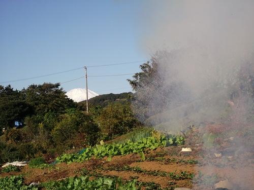 富士山に見守られ....玉ねぎ.植え付け!_b0137932_22432043.jpg