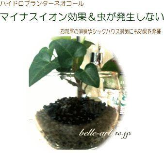 b0142234_1420345.jpg