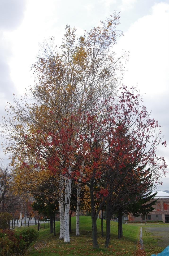 木のある風景_e0159646_2295272.jpg