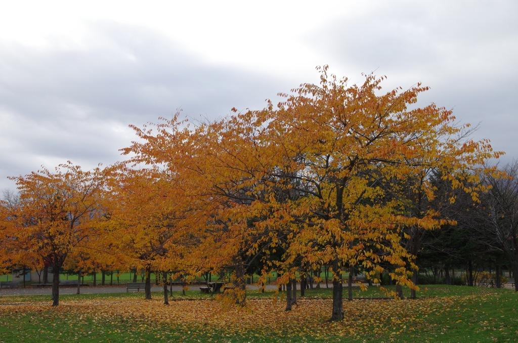 木のある風景_e0159646_2304785.jpg