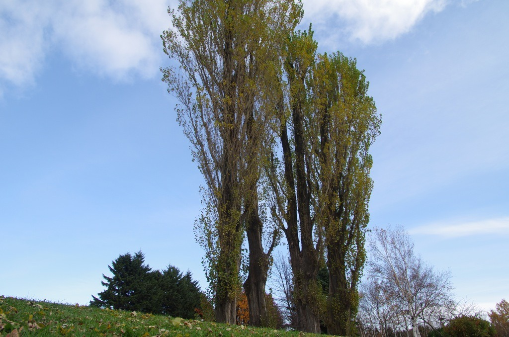 木のある風景_e0159646_2311664.jpg
