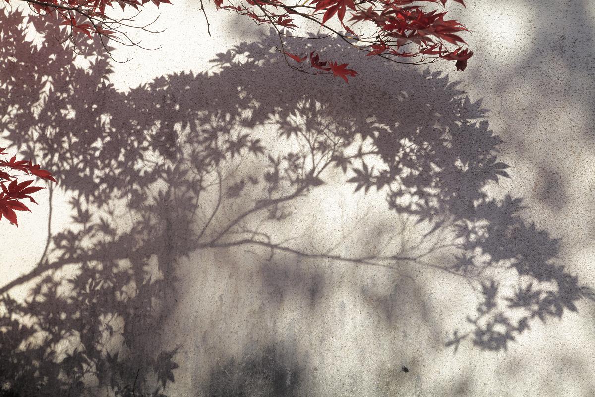 紅葉 2012  西山  勝持寺_f0021869_23191329.jpg