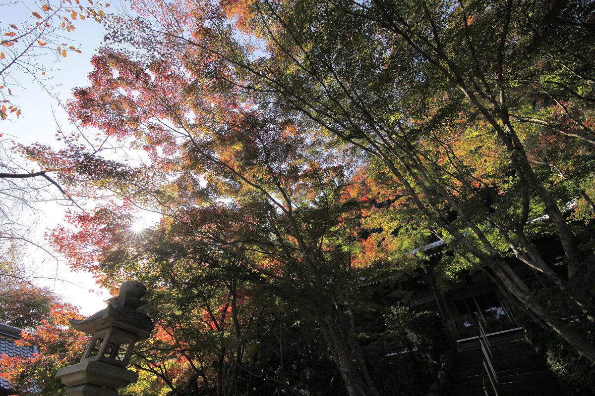 紅葉 2012  西山  勝持寺_f0021869_23255466.jpg