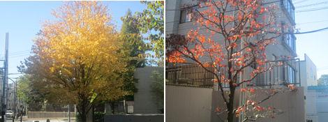 紅葉の季節到来_d0183174_19472947.jpg