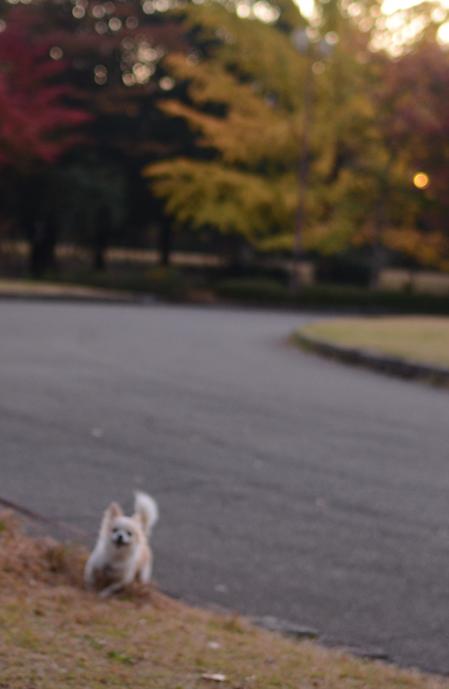 秋・犬景_b0194880_0373576.jpg
