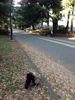 公園の紅葉はもうすぐ赤く染まるかなぁ〜_d0266681_216411.jpg