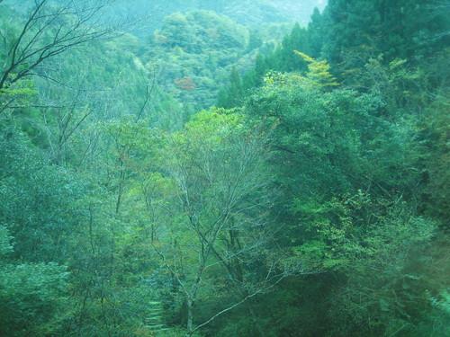 高知県産材・顔の見える産地ツアー_a0155290_1232757.jpg