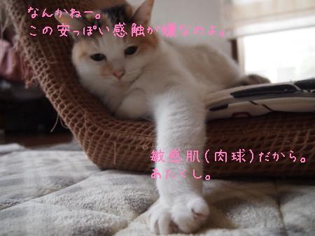 b0042310_11178.jpg