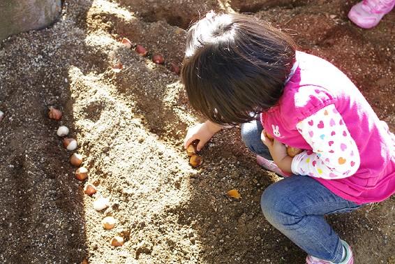 「花いっぱい!2,000球の球根を植えよう!」を開催しました。_e0235911_150191.jpg