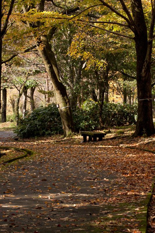 #1583 秋の樹木公園_b0177233_4265269.jpg