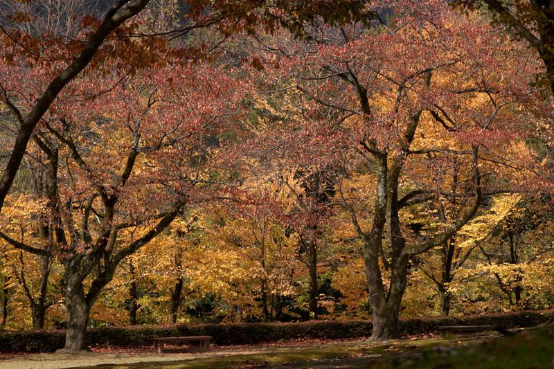#1583 秋の樹木公園_b0177233_4312572.jpg