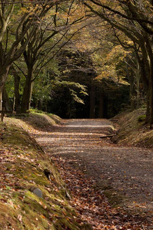 #1583 秋の樹木公園_b0177233_432427.jpg