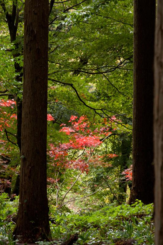 #1583 秋の樹木公園_b0177233_4324638.jpg