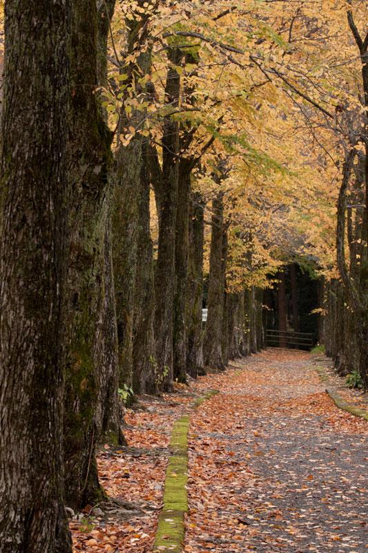 #1583 秋の樹木公園_b0177233_4353492.jpg