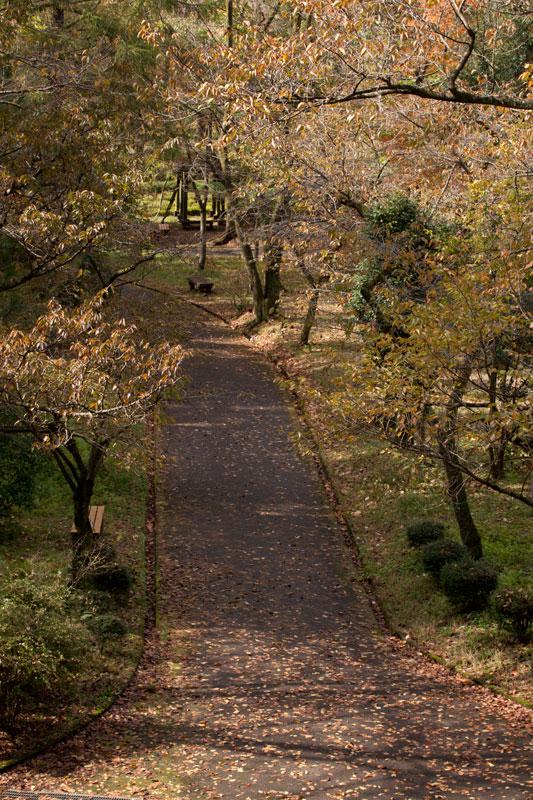 #1583 秋の樹木公園_b0177233_435890.jpg