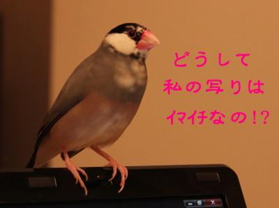 b0158061_2218546.jpg