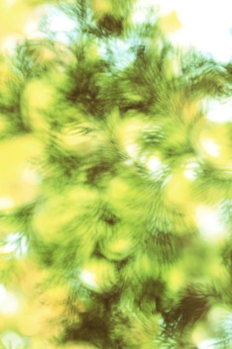 ■■ うつろひゆく季節を感じて ~The Art of Nature 2012  ~1~ ■■_c0195662_2341315.jpg