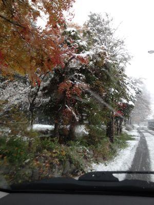 ハルの初雪〜本当は紅葉が見たかったんです〜_b0224969_20561284.jpg