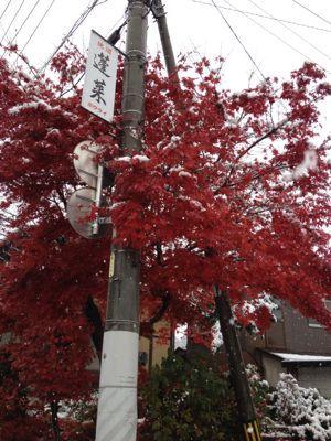 ハルの初雪〜本当は紅葉が見たかったんです〜_b0224969_20561647.jpg