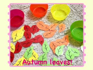 〜セラ先生〜 Autumn leaves_a0285570_153714.jpg