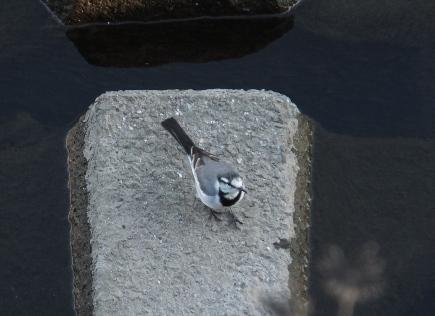 鳥ピクニック♪_e0122770_0384926.jpg
