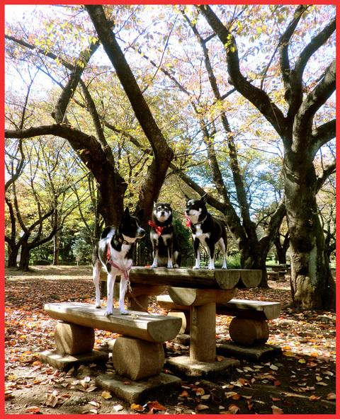青山、晩秋風景。_e0236072_12415987.jpg