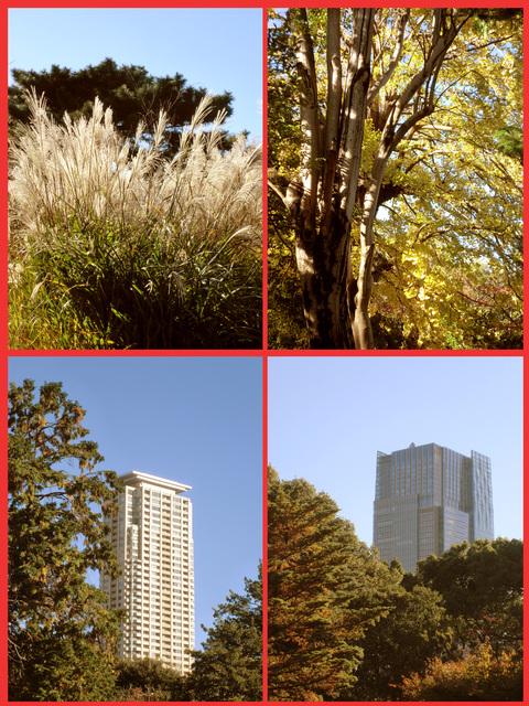 青山、晩秋風景。_e0236072_1244514.jpg