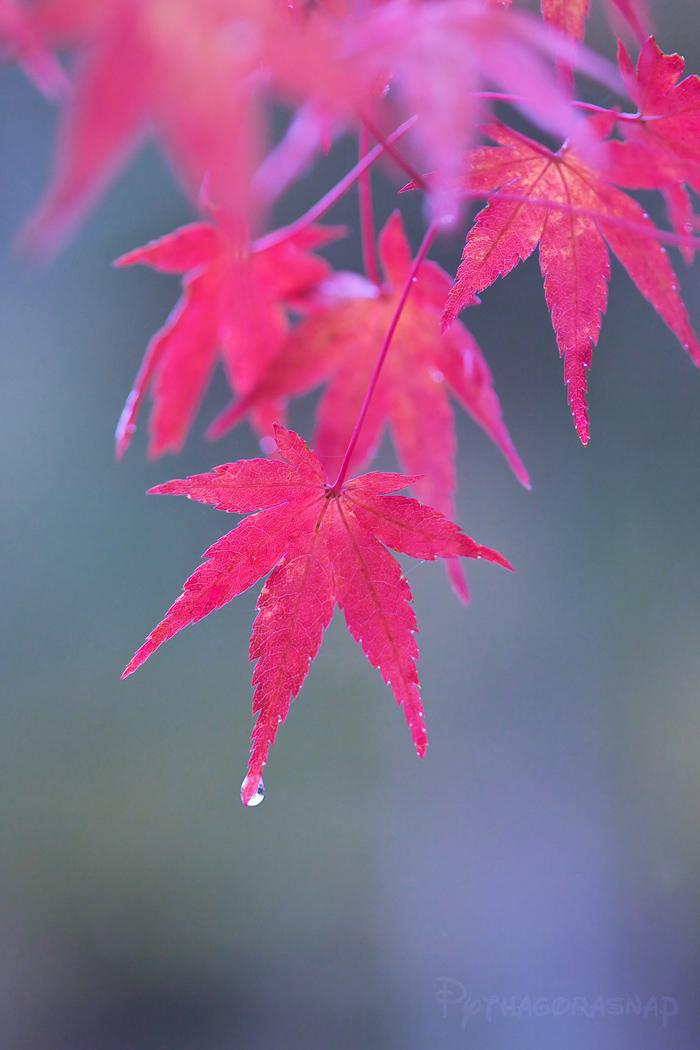秋雨に濡れて。_c0187584_1633327.jpg