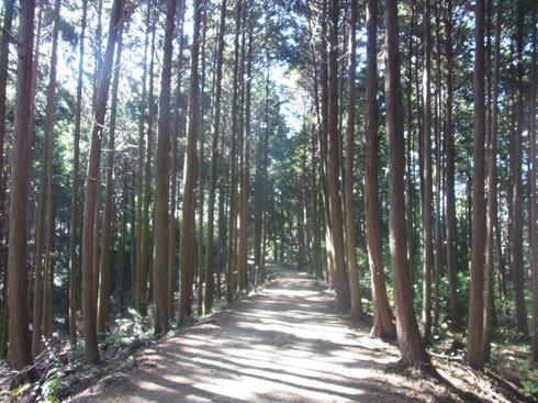 一日目:高野山へトレッキング_a0207588_22345684.jpg