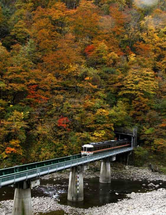 撮り鉄ー紅葉を縫う鉄道・高山線より_d0088788_0411756.jpg