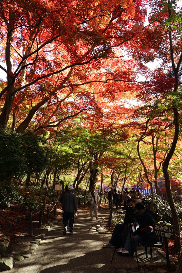 瑞宝寺公園2012 (2)_b0043304_2181134.jpg