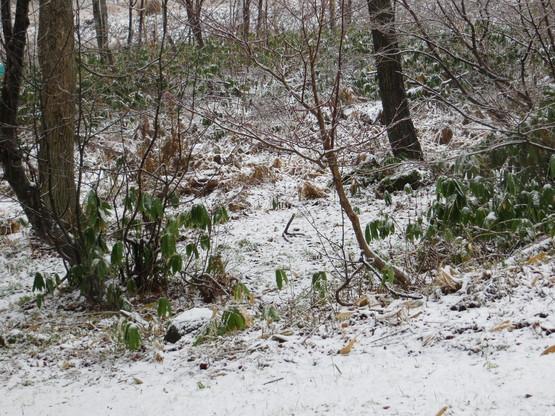 本格的な雪!_d0070814_8264597.jpg